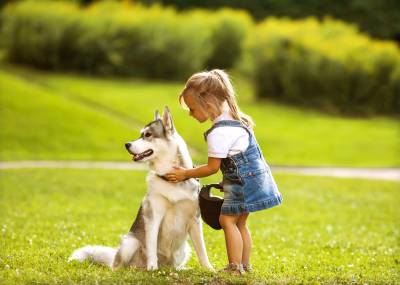 Naperville dog bite injury lawyer